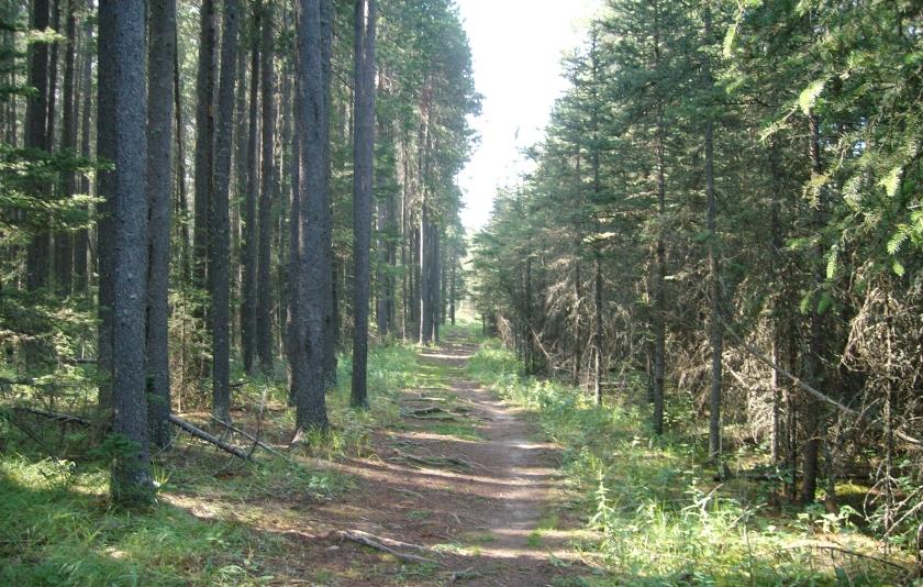 cypress-hills-camping-trip-2010-011.jpg
